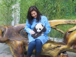 英拉游四川 亲抱萌态小熊猫